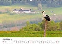 Leben in freier Natur - Wildtiere in natürlicher Umgebung (Wandkalender 2019 DIN A3 quer) - Produktdetailbild 9