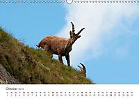 Leben in freier Natur - Wildtiere in natürlicher Umgebung (Wandkalender 2019 DIN A3 quer) - Produktdetailbild 10