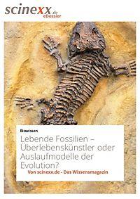 fossilien entdecken sie ausgew hlte angebote bei weltbild. Black Bedroom Furniture Sets. Home Design Ideas