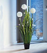 "LED-Blumendeko ""Allium"" - Produktdetailbild 2"
