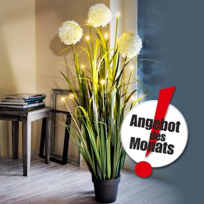 LED-Blumendeko Allium