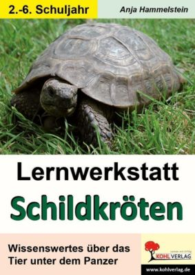 Lernwerkstatt Schildkröten, Anja Hammelstein