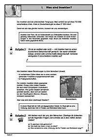 Lernwerkstatt Staatenbildende Insekten - Produktdetailbild 9