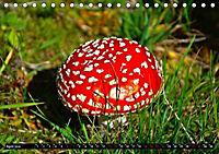 Licht und Schatten - Herbst im Südschwarzwald (Tischkalender 2019 DIN A5 quer) - Produktdetailbild 4