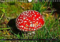 Licht und Schatten - Herbst im Südschwarzwald (Wandkalender 2019 DIN A4 quer) - Produktdetailbild 4