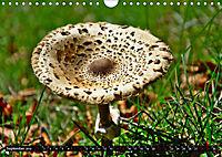Licht und Schatten - Herbst im Südschwarzwald (Wandkalender 2019 DIN A4 quer) - Produktdetailbild 9