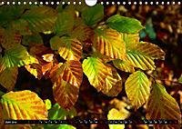 Licht und Schatten - Herbst im Südschwarzwald (Wandkalender 2019 DIN A4 quer) - Produktdetailbild 6