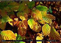 Licht und Schatten - Herbst im Südschwarzwald (Wandkalender 2019 DIN A3 quer) - Produktdetailbild 6