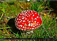 Licht und Schatten - Herbst im Südschwarzwald (Wandkalender 2019 DIN A3 quer) - Produktdetailbild 4
