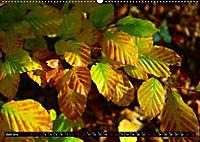 Licht und Schatten - Herbst im Südschwarzwald (Wandkalender 2019 DIN A2 quer) - Produktdetailbild 6