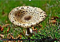 Licht und Schatten - Herbst im Südschwarzwald (Wandkalender 2019 DIN A2 quer) - Produktdetailbild 9