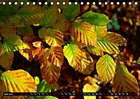 Licht und Schatten - Herbst im Südschwarzwald (Tischkalender 2019 DIN A5 quer) - Produktdetailbild 6
