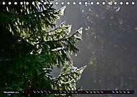 Licht und Schatten - Herbst im Südschwarzwald (Tischkalender 2019 DIN A5 quer) - Produktdetailbild 11