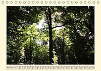 Licht und Schattiges (Tischkalender 2019 DIN A5 quer) - Produktdetailbild 11
