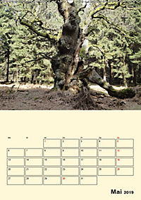 Licht und Schattiges (Wandkalender 2019 DIN A2 hoch) - Produktdetailbild 5