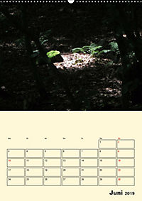 Licht und Schattiges (Wandkalender 2019 DIN A2 hoch) - Produktdetailbild 6