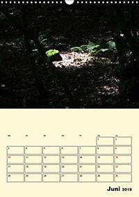 Licht und Schattiges (Wandkalender 2019 DIN A3 hoch) - Produktdetailbild 6