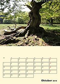 Licht und Schattiges (Wandkalender 2019 DIN A3 hoch) - Produktdetailbild 10
