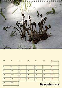 Licht und Schattiges (Wandkalender 2019 DIN A3 hoch) - Produktdetailbild 12
