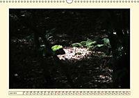 Licht und Schattiges (Wandkalender 2019 DIN A3 quer) - Produktdetailbild 6