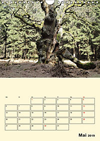 Licht und Schattiges (Wandkalender 2019 DIN A4 hoch) - Produktdetailbild 5