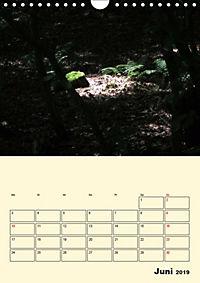 Licht und Schattiges (Wandkalender 2019 DIN A4 hoch) - Produktdetailbild 6