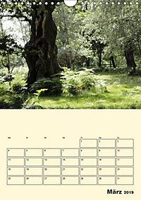 Licht und Schattiges (Wandkalender 2019 DIN A4 hoch) - Produktdetailbild 3
