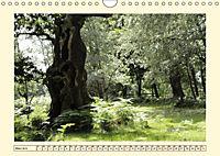 Licht und Schattiges (Wandkalender 2019 DIN A4 quer) - Produktdetailbild 3