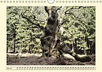Licht und Schattiges (Wandkalender 2019 DIN A4 quer) - Produktdetailbild 5