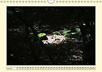 Licht und Schattiges (Wandkalender 2019 DIN A4 quer) - Produktdetailbild 6