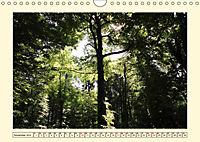 Licht und Schattiges (Wandkalender 2019 DIN A4 quer) - Produktdetailbild 11