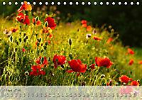 Lichtdurchflutet (Tischkalender 2019 DIN A5 quer) - Produktdetailbild 3