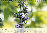 Lichtdurchflutet (Tischkalender 2019 DIN A5 quer) - Produktdetailbild 4