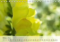 Lichtdurchflutet (Tischkalender 2019 DIN A5 quer) - Produktdetailbild 10