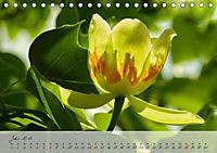 Lichtdurchflutet (Tischkalender 2019 DIN A5 quer) - Produktdetailbild 7