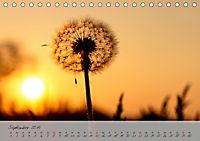 Lichtdurchflutet (Tischkalender 2019 DIN A5 quer) - Produktdetailbild 9