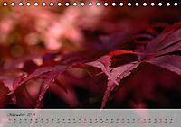 Lichtdurchflutet (Tischkalender 2019 DIN A5 quer) - Produktdetailbild 12