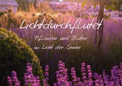 Lichtdurchflutet (Wandkalender 2019 DIN A2 quer), Ilse Kunz