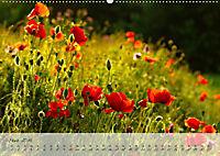 Lichtdurchflutet (Wandkalender 2019 DIN A2 quer) - Produktdetailbild 3