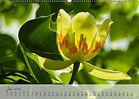 Lichtdurchflutet (Wandkalender 2019 DIN A2 quer) - Produktdetailbild 7
