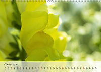 Lichtdurchflutet (Wandkalender 2019 DIN A2 quer) - Produktdetailbild 10