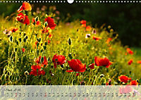 Lichtdurchflutet (Wandkalender 2019 DIN A3 quer) - Produktdetailbild 3