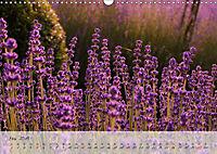 Lichtdurchflutet (Wandkalender 2019 DIN A3 quer) - Produktdetailbild 5