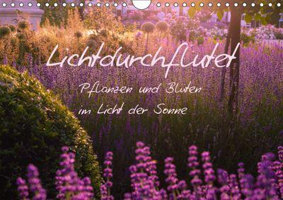 Lichtdurchflutet (Wandkalender 2019 DIN A4 quer), Ilse Kunz