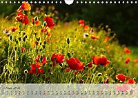 Lichtdurchflutet (Wandkalender 2019 DIN A4 quer) - Produktdetailbild 3