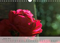 Lichtdurchflutet (Wandkalender 2019 DIN A4 quer) - Produktdetailbild 1