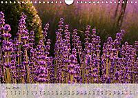 Lichtdurchflutet (Wandkalender 2019 DIN A4 quer) - Produktdetailbild 5