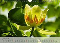 Lichtdurchflutet (Wandkalender 2019 DIN A4 quer) - Produktdetailbild 7