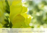 Lichtdurchflutet (Wandkalender 2019 DIN A4 quer) - Produktdetailbild 10