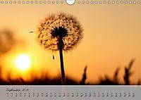 Lichtdurchflutet (Wandkalender 2019 DIN A4 quer) - Produktdetailbild 9